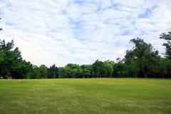 Arbre et herbe de ciel photos libres de droits
