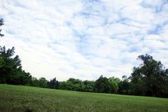 Arbre et herbe de ciel image libre de droits