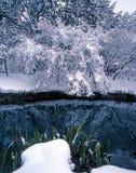 Arbre et herbe de neige Image stock