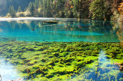 Arbre et lac d'automne photographie stock libre de droits