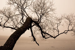 Arbre et lac en brouillard photo stock