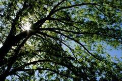 Arbre et lumière du soleil Photo libre de droits