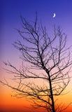 Arbre et lune neuve Photos libres de droits