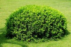 Arbre et pelouse Photographie stock libre de droits