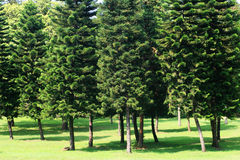 Arbre et pelouse Image stock