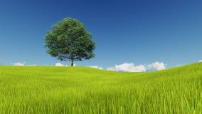 Arbre et pelouse sur un fond de ciel clair illustration stock