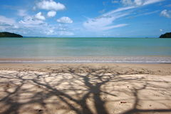 Arbre et plage d'ombre Photographie stock