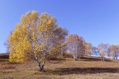 Arbre et prairie en automne Photos stock