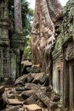 Arbre et racines géants dans de temple le bal d'étudiants Angkor Vat merci Image stock