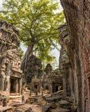 Arbre et racines géants dans de temple le bal d'étudiants Angkor Vat merci Photos libres de droits