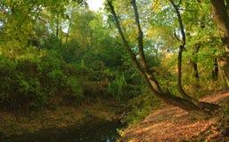 Arbre et rivière Photographie stock libre de droits