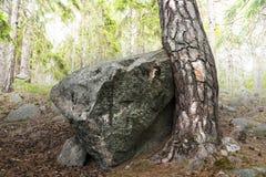 Arbre et roche Images libres de droits