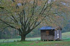 Arbre et Shack Photographie stock