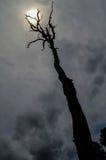 Arbre et soleil morts photos libres de droits