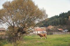Arbre et vache Image stock