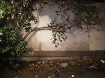 Arbre et vieux fond de mur photographie stock