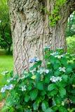 Arbre et vignes dans le jardin du musée Philadelphie, Pennsylvanie de Barnes Photo libre de droits