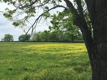 Arbre et Wildflowers jaunes Photos stock