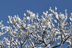 Arbre fantastique dans la neige Images libres de droits