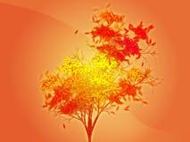 Arbre feuillu d'automne Images stock
