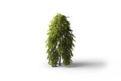 arbre feuillu d'isolat illustration de vecteur