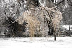 arbre figé photo stock