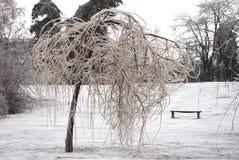 arbre figé photographie stock libre de droits