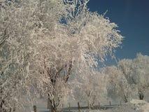 arbre figé Images stock