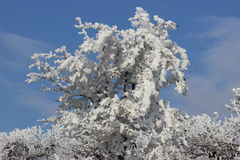 arbre figé Images libres de droits