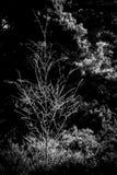 arbre figé Image stock