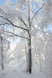 Arbre figé de l'hiver couvert de neige Photo libre de droits