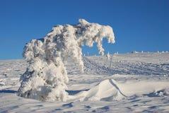 Arbre figé en hiver Photos libres de droits
