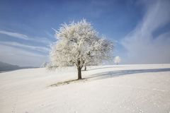 Arbre figé sur la zone de l'hiver et le ciel bleu photographie stock