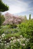 Arbre fleurissant dans Giverny Image libre de droits