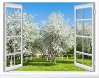 Arbre fleurissant de fenêtre de vue Images stock