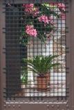 Arbre fleurissant et le pot de fleur derrière des barres Photographie stock libre de droits