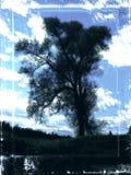 Arbre foncé ; Image libre de droits
