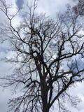 Arbre foncé, ciel bleu Automne tôt Photos stock