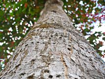 arbre, forêt, nature, coffres, écorce, bois, vert photo stock