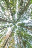 Arbre forestier d'automne Photographie stock libre de droits
