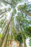 Arbre forestier d'automne Images libres de droits