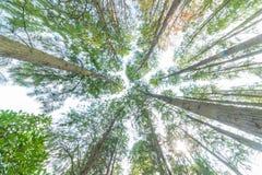 Arbre forestier d'automne Photographie stock