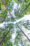 Arbre forestier d'automne Photo libre de droits