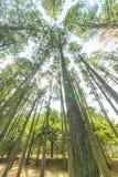 Arbre forestier d'automne Image libre de droits