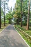 Arbre forestier d'automne Images stock