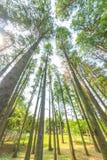 Arbre forestier d'automne Photos stock