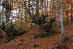 Arbre forestier de conte de fées d'automne Photos libres de droits