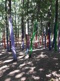 Arbre forestier de Couloured images stock