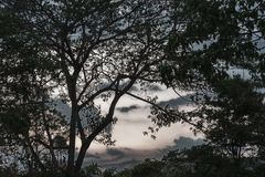 Arbre forestier, pin sous le ciel, image discrète Photos libres de droits