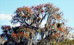 Arbre forestier tropical en fleur image stock
